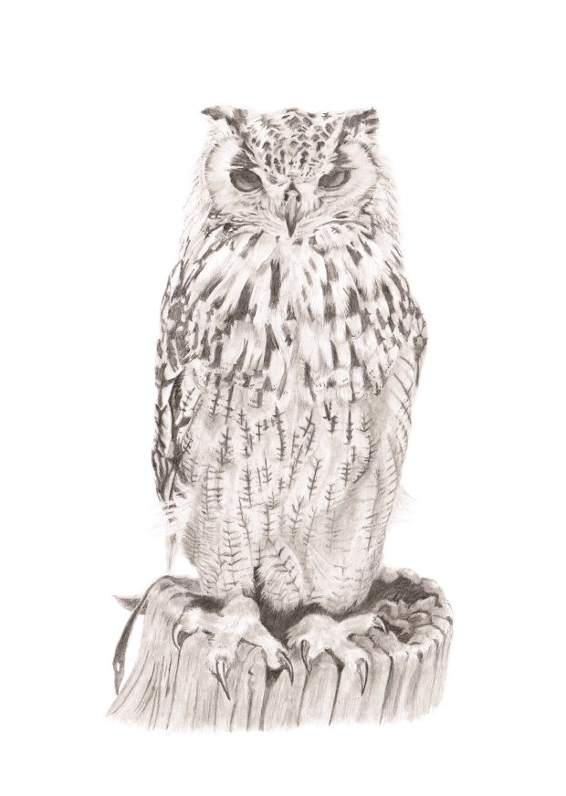 Eurasian Eagle Owl - pencil portrait - by Robert Burke